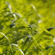 Green grass  background - Foto Stock
