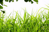 Grass in forest — Stock Photo