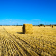 Farm field with hay bales — Stock Photo #11923869