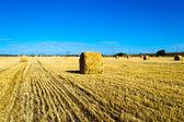 Campo de granja con balas de heno — Foto de Stock
