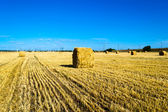 Farma pole s balíky sena — Stock fotografie