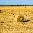 Farm field with hay bales — Stock Photo #11941998