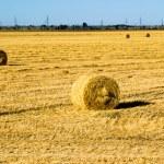 Farm field with hay bales — Stock Photo