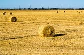 Farm field with hay bales — Стоковое фото