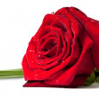 Red rose with water drops — Stock Photo