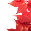 Autumn leaves background with copy space — Stock Photo