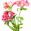 Bouquet of lilies (alstroemeria) — 图库照片