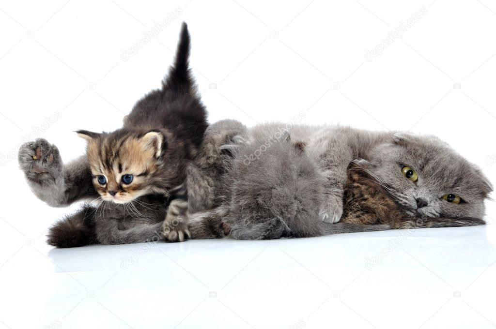 Close-up portrait of a cat breastfeeding kittens — Foto Stock #11809821