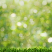 Green grass over abstract summer backgrounds with beauty bokeh — Stock Photo