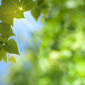 Abstract summer backgrounds with sun beam and leaf — Stock Photo