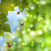 Abstract summer backgrounds with sun beam and butterfly — Stock Photo