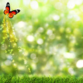 Abstract summer backgrounds with beauty butterfly — Stock Photo