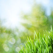 Abstract natural backgrounds with green grass and beauty bokeh — Стоковое фото