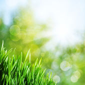 Abstract natural backgrounds with green grass and sunbeam — Stock Photo