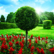 Optimistic garden. Abstract natural backgrounds under blue skies — ストック写真