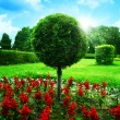 Optimistic garden. Abstract natural backgrounds under blue skies — Foto Stock
