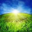 Sunny morning on the meadow. Rural abstract backgrounds — Stock Photo