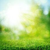 在灿烂的阳光。抽象的自然背景 — 图库照片