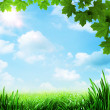 Optimistic meadow. Abstract natural backgrounds — Stock Photo #11393312