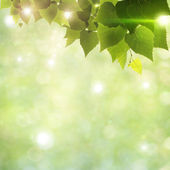 Sunlight through foliage, abstract natural backgrounds — Stock Photo
