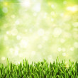 Green grass. Abstract natural backgrounds — Stock Photo