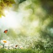 Abstract natural backgrounds with beauty bokeh — Stock Photo #11657846