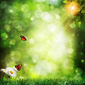 Abstract summer backgrounds with daisy flowers and butterfly — Stock Photo