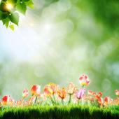 Resumen antecedentes naturales con flores de tulipán — Foto de Stock