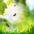 Beauty natural backgrounds with green grass and butterfly — Zdjęcie stockowe