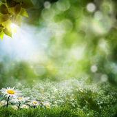 сезонные природные стола с цветы ромашки — Стоковое фото