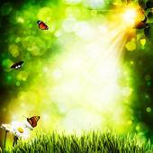 Letní přírodní pozadí s krásou bokeh — Stock fotografie