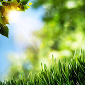 Seasonal natural backgrounds with green grass and beauty bokeh — Stock Photo