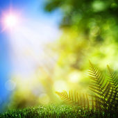 Fern. Abstract natural backgrounds with beauty bokeh — Stock Photo