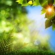 Summer natural backgrounds with beauty bokeh — Stock Photo