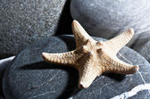 Starfish. Abstract summer backgrounds with star fish and pebble — Stock Photo