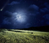 Nightly meadow. — Stock Photo