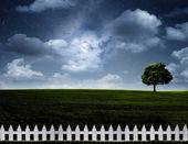 Nightly meadow. — Stock Photo