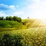 après-midi d'été lumineuse — Photo