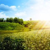 明るい夏の午後. — ストック写真