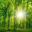 Nature tree . pathway in the forest with sunlight backgrounds. — Stock Photo #11005253