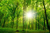 Nature tree . pathway in the forest with sunlight backgrounds. — Foto de Stock