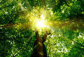 Nature tree . pathway in the forest with sunlight backgrounds. — Foto Stock