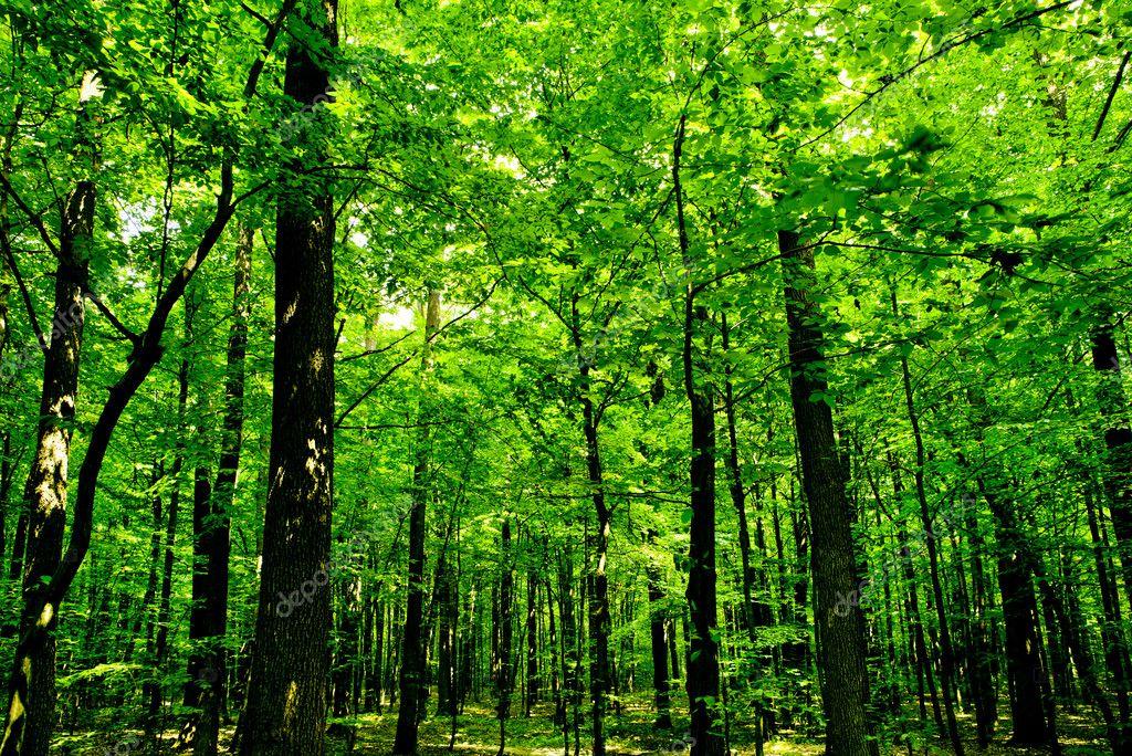 森林树木.自然绿色木阳光背景图片