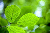 Folhas de árvores — Foto Stock