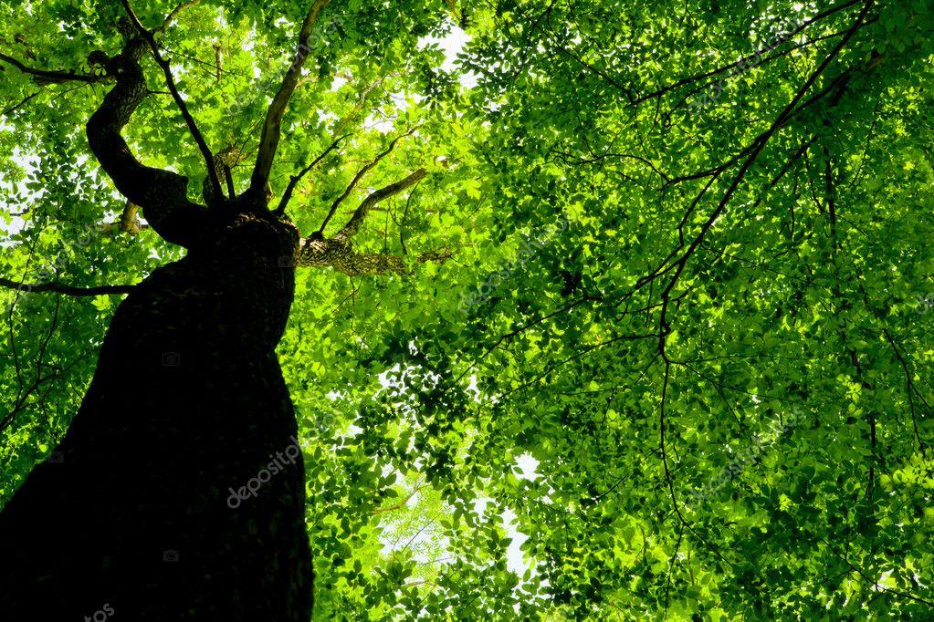 Фотообои Лесные деревья