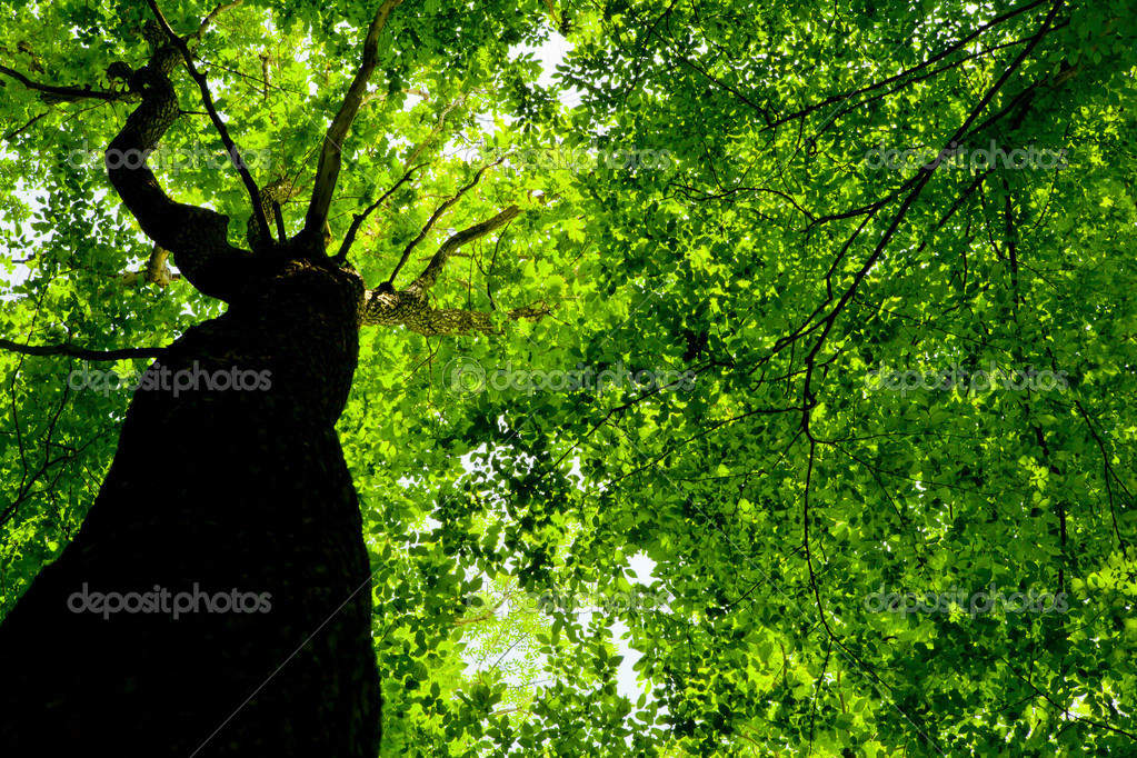 Фотообои Forest trees