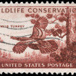 US- CIRC1956 Wild Turkey — Stock Photo #12381493