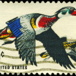 Stock Photo: US- CIRC1968 Ducks