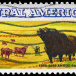 USA - CIRCA 1973 Cattle — Stock Photo