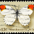 Stock Photo: US- CIRC1977 Orange Tip
